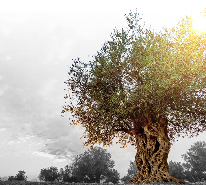 blessed-tree-waqf