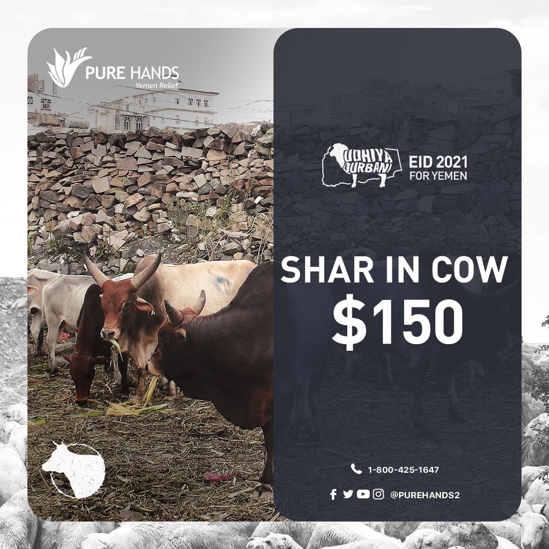 Temp Cow share-min
